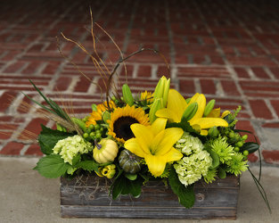 Autumn Expressions Upper Darby Polites Florist, Springfield Polites Florist