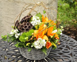 Out of the Woods Upper Darby Polites Florist, Springfield Polites Florist